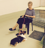 Click! For Obedience Puppy 1 & 2